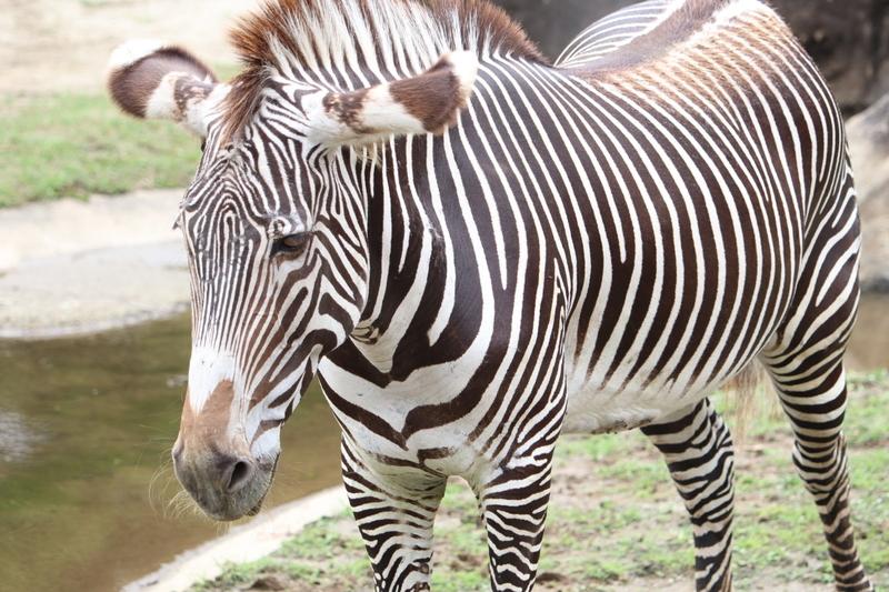 f:id:zoonimal:20210110165425j:plain