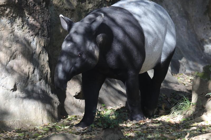 f:id:zoonimal:20210112125815j:plain