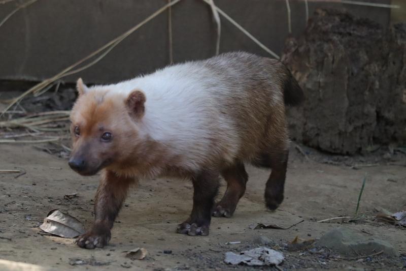 f:id:zoonimal:20210112130152j:plain