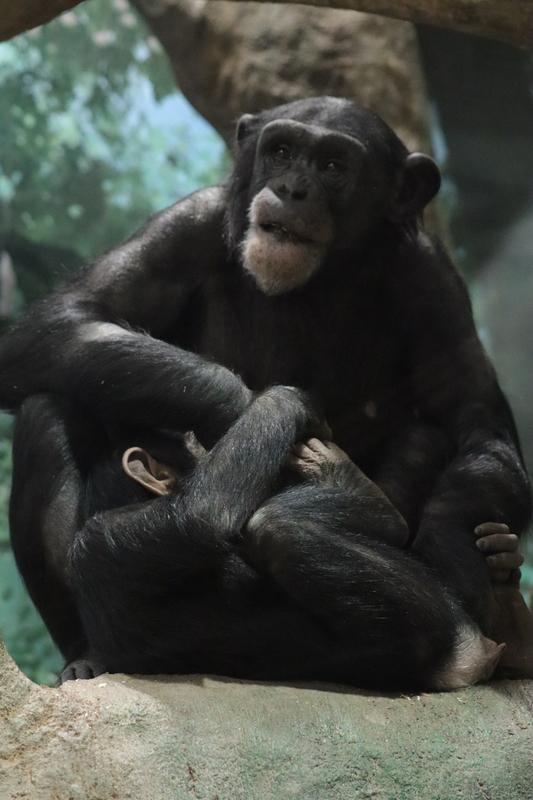 f:id:zoonimal:20210112130233j:plain