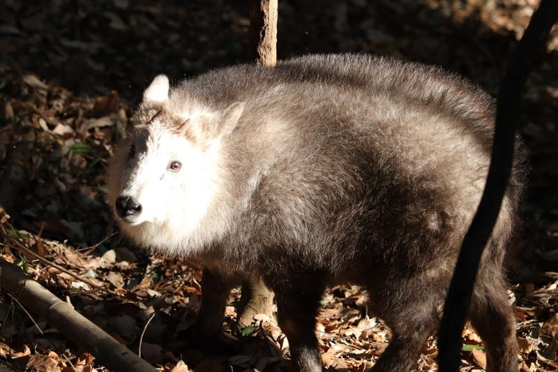 f:id:zoonimal:20210115112134j:plain