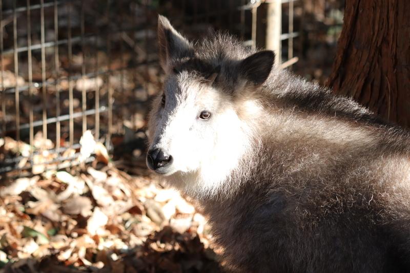 f:id:zoonimal:20210115112139j:plain