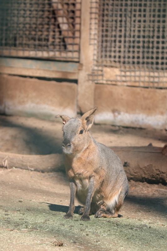 f:id:zoonimal:20210115114450j:plain