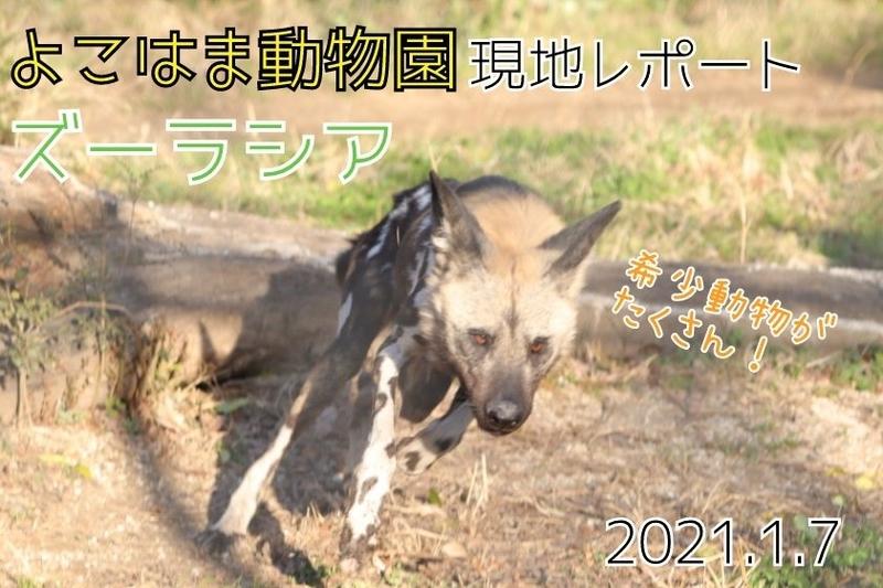 f:id:zoonimal:20210116160629j:plain