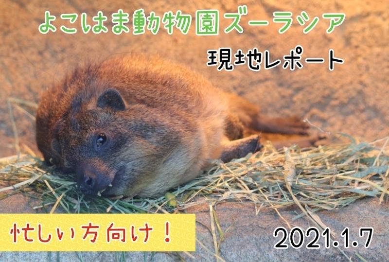 f:id:zoonimal:20210117133142j:plain