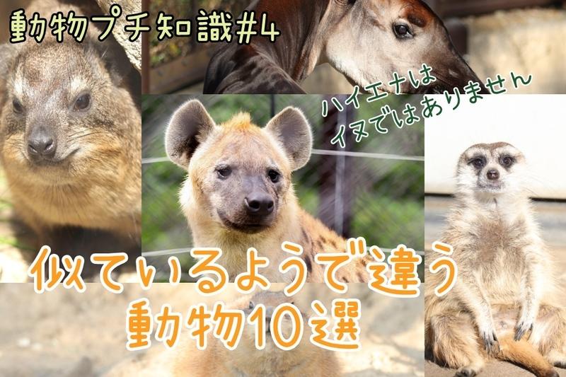 f:id:zoonimal:20210119001301j:plain