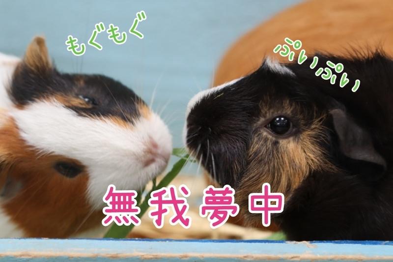 f:id:zoonimal:20210119120229j:plain