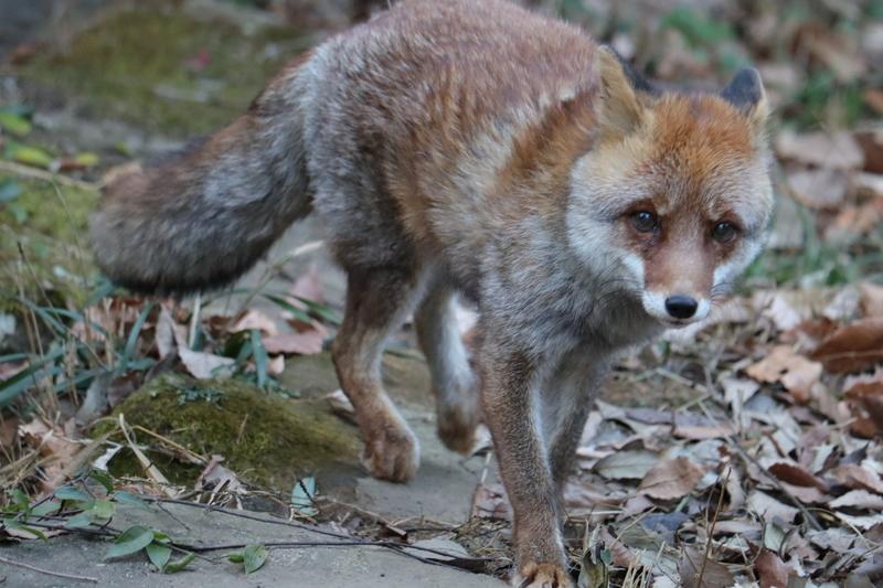 f:id:zoonimal:20210119122633j:plain