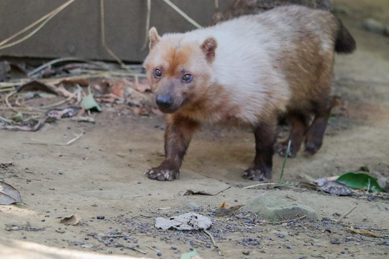f:id:zoonimal:20210119135256j:plain