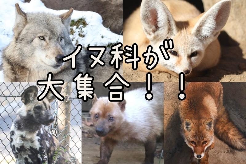 f:id:zoonimal:20210119140227j:plain