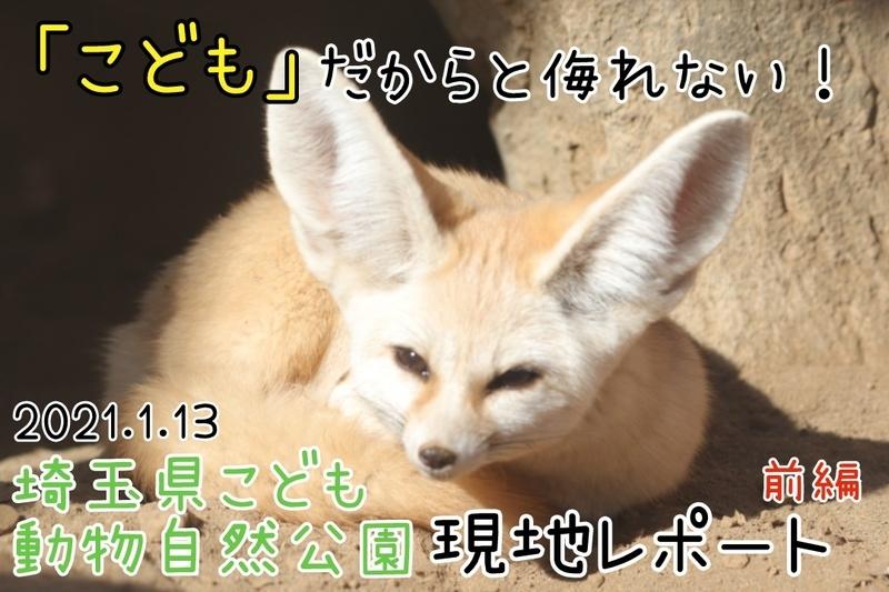 f:id:zoonimal:20210122234433j:plain