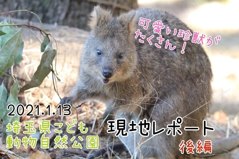 f:id:zoonimal:20210126223719j:plain