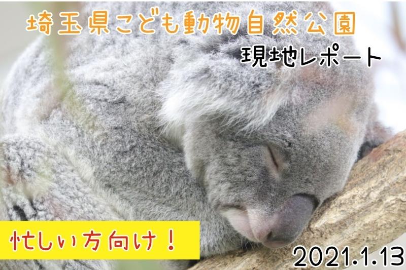 f:id:zoonimal:20210129225914j:plain
