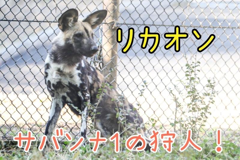 f:id:zoonimal:20210207161224j:plain