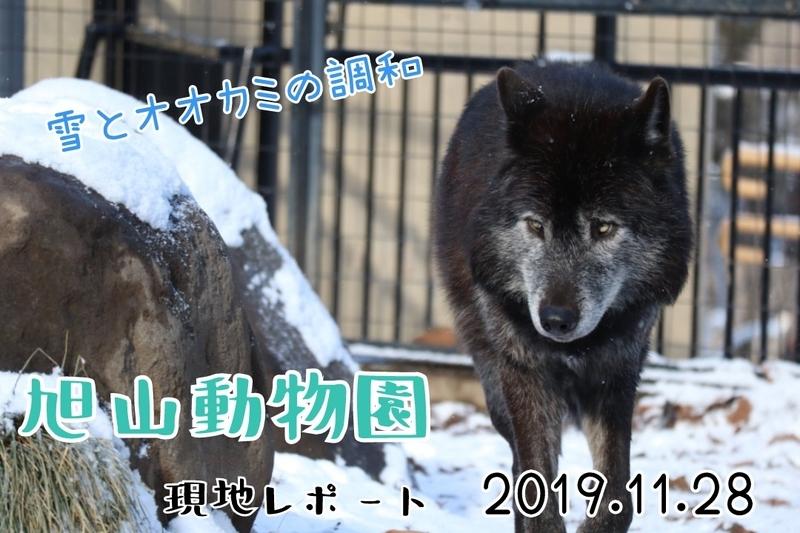 f:id:zoonimal:20210221021658j:plain