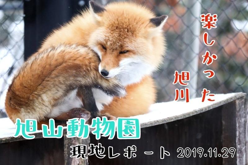 f:id:zoonimal:20210227235904j:plain