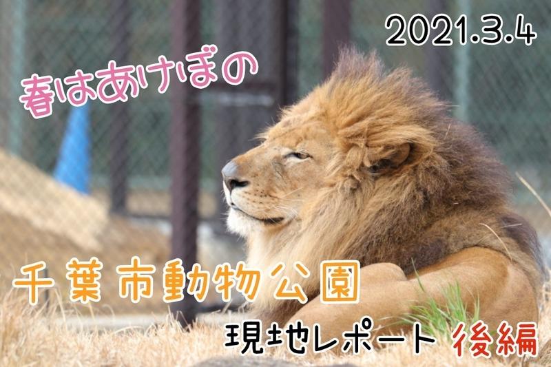 f:id:zoonimal:20210404151738j:plain