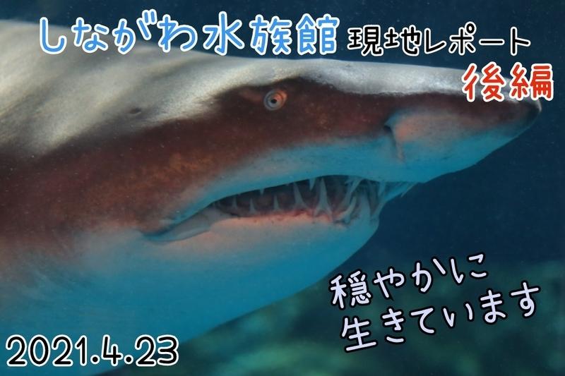 f:id:zoonimal:20210523180116j:plain
