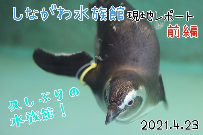 f:id:zoonimal:20210523180121j:plain