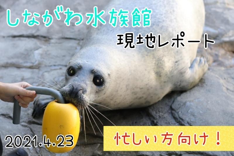 f:id:zoonimal:20210604231120j:plain