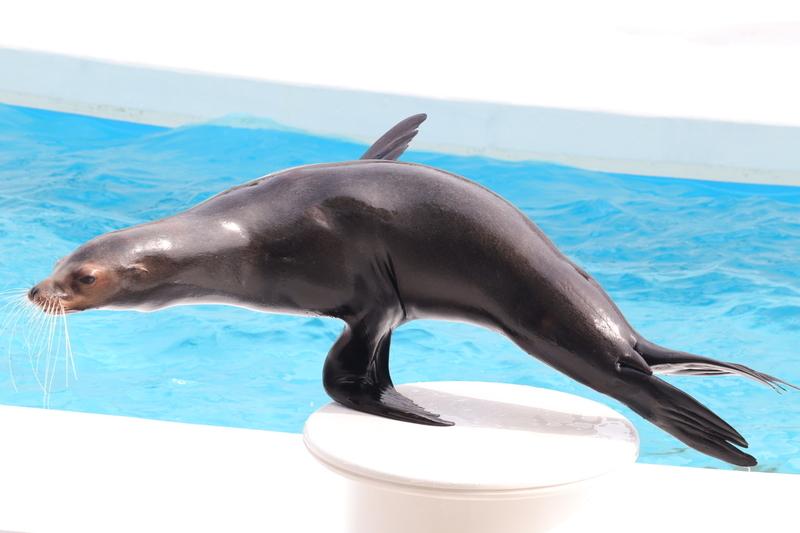 f:id:zoonimal:20210605011213j:plain