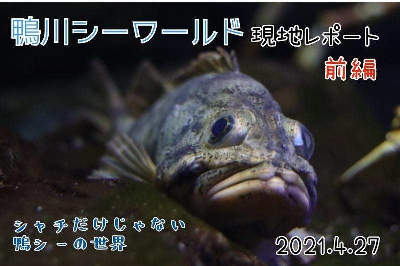 f:id:zoonimal:20210606194717j:plain