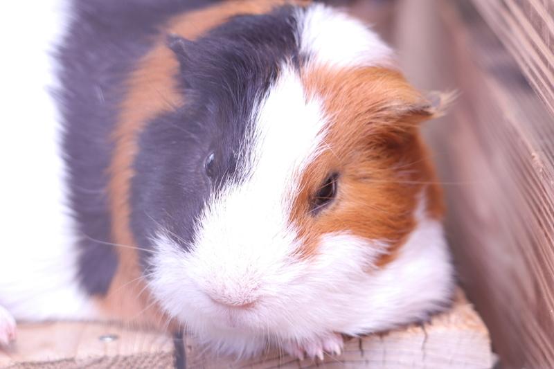 f:id:zoonimal:20210613175107j:plain