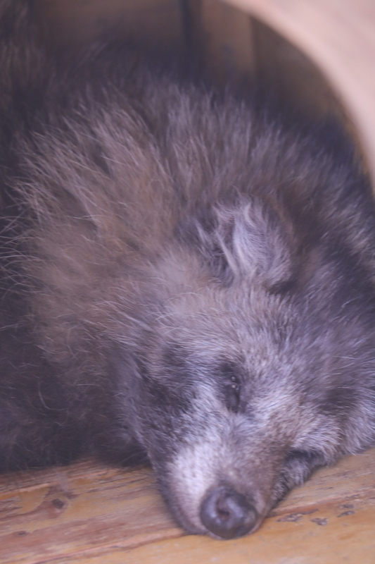 f:id:zoonimal:20210613175812j:plain