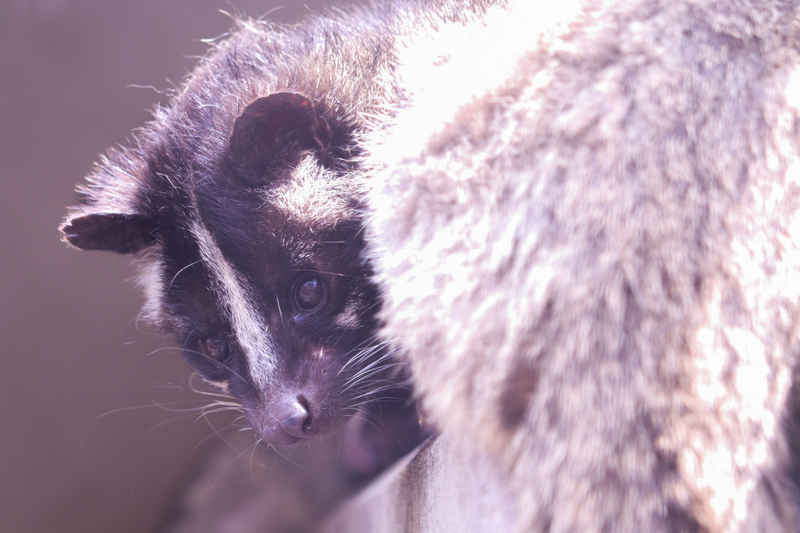 f:id:zoonimal:20210619103955j:plain