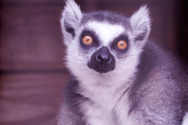 f:id:zoonimal:20210620101524j:plain