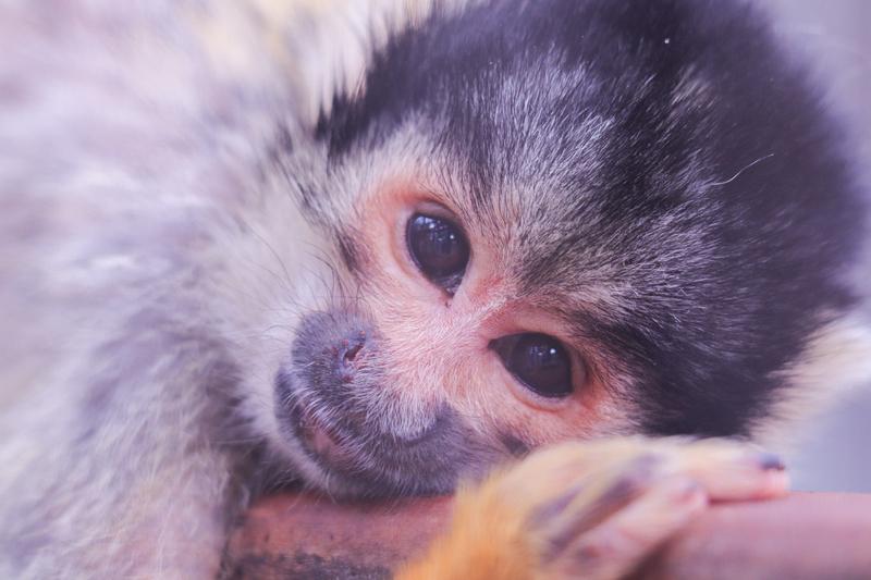 f:id:zoonimal:20210620105058j:plain