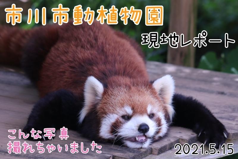 f:id:zoonimal:20210620171111j:plain