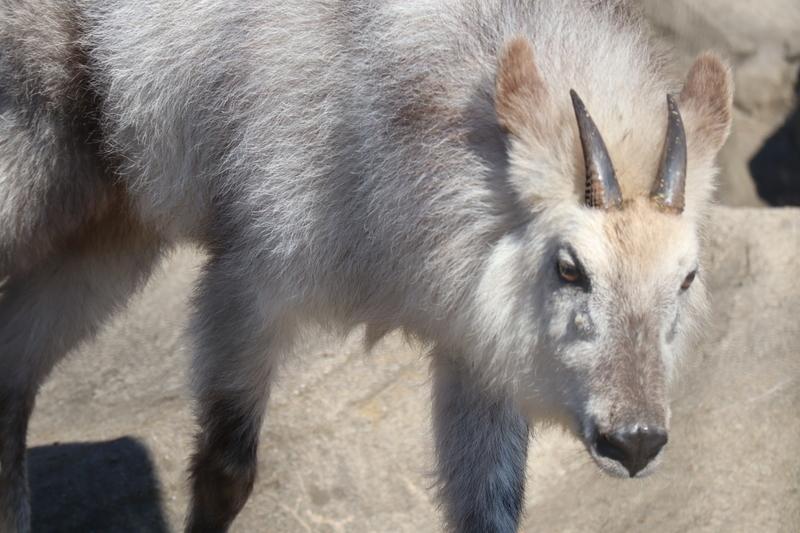 f:id:zoonimal:20210704174920j:plain