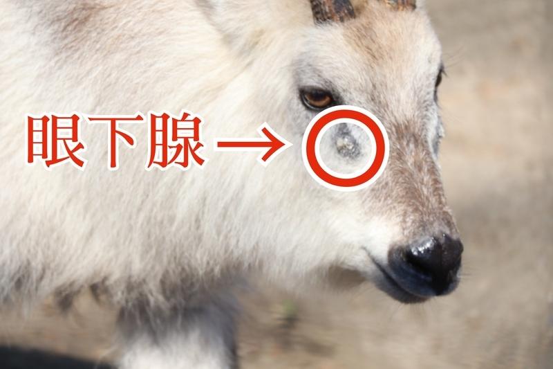 f:id:zoonimal:20210705224221j:plain