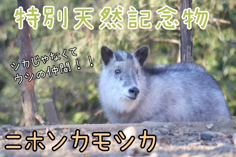 f:id:zoonimal:20210706182228j:plain