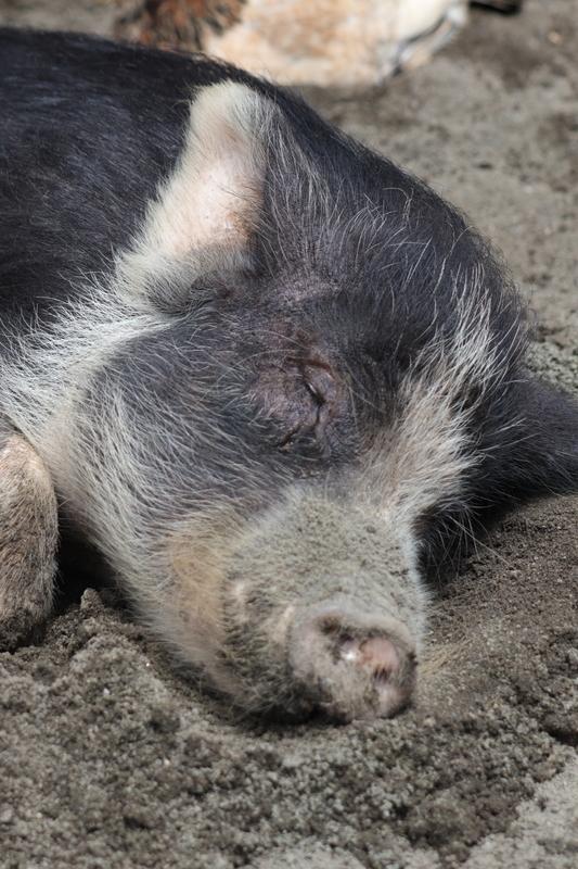 f:id:zoonimal:20210711144450j:plain