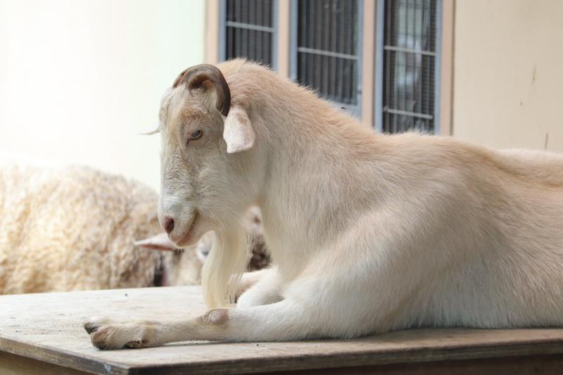 f:id:zoonimal:20210711144514j:plain