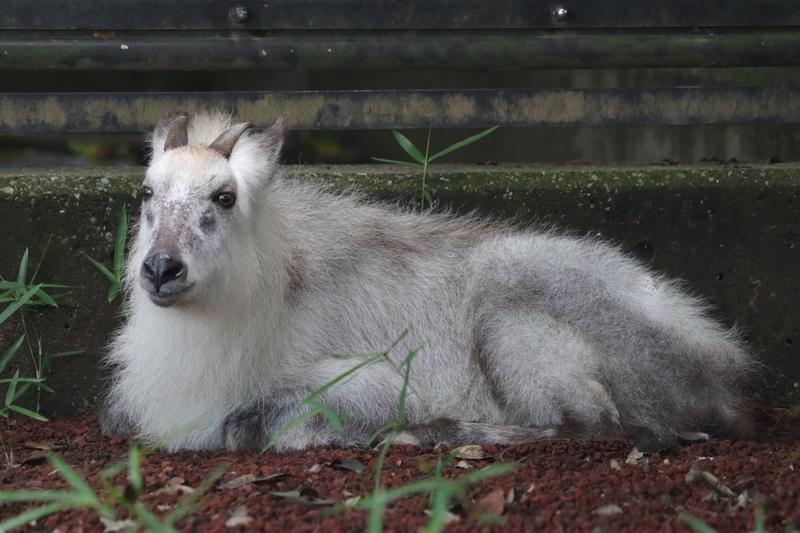 f:id:zoonimal:20210711144519j:plain