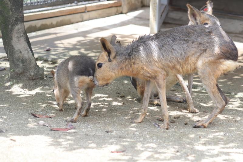 f:id:zoonimal:20210711144650j:plain