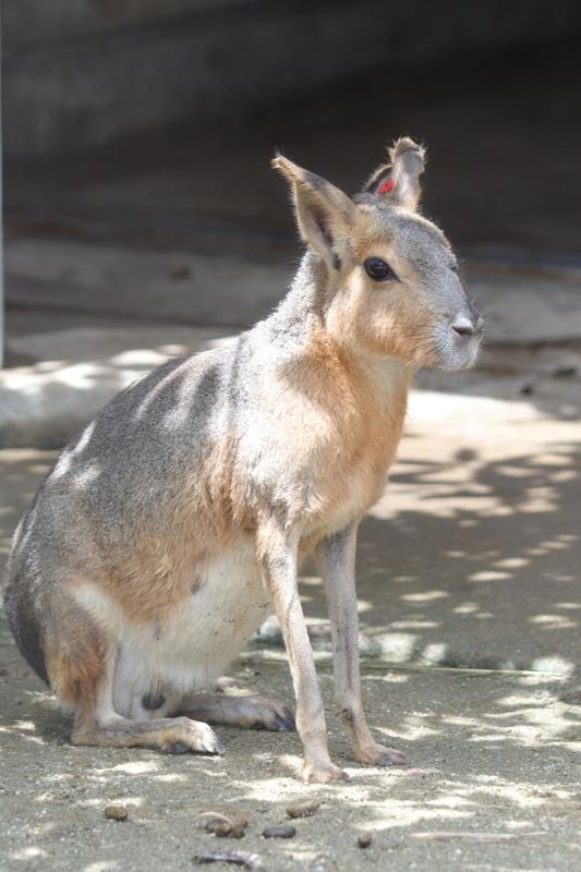 f:id:zoonimal:20210711144703j:plain