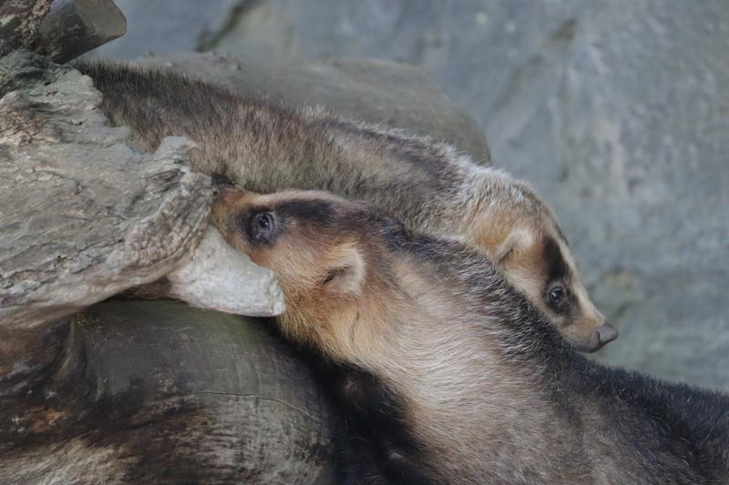f:id:zoonimal:20210711144821j:plain