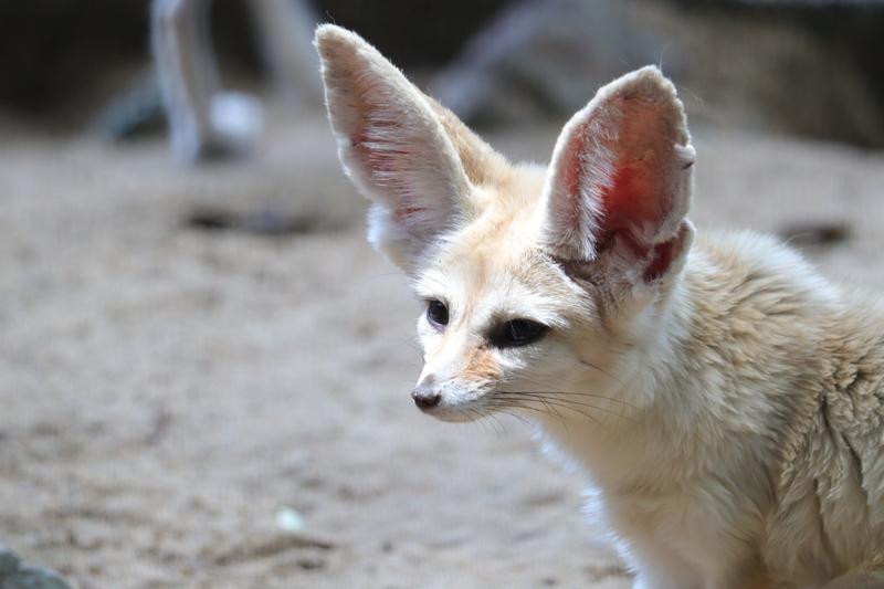 f:id:zoonimal:20210711144927j:plain