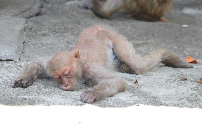 f:id:zoonimal:20210711145056j:plain
