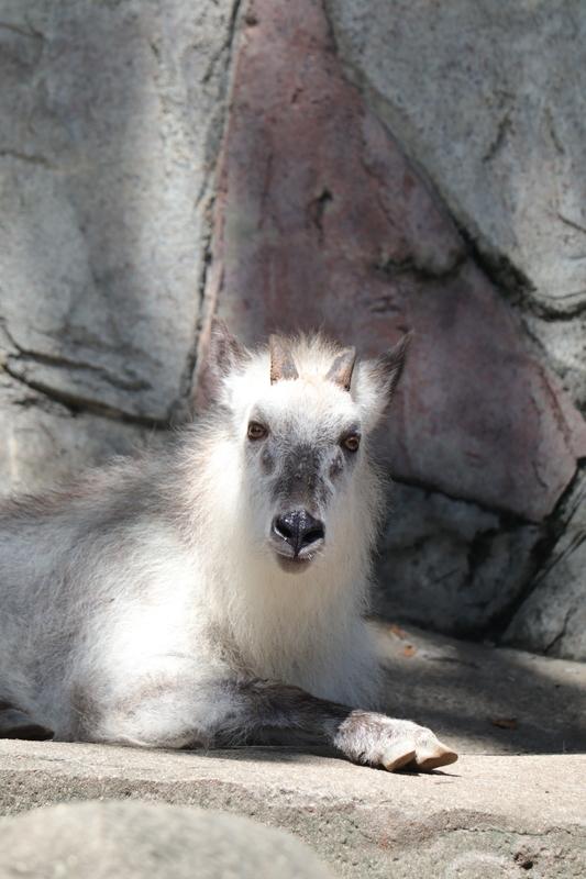 f:id:zoonimal:20210711145526j:plain