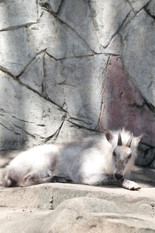 f:id:zoonimal:20210711145539j:plain