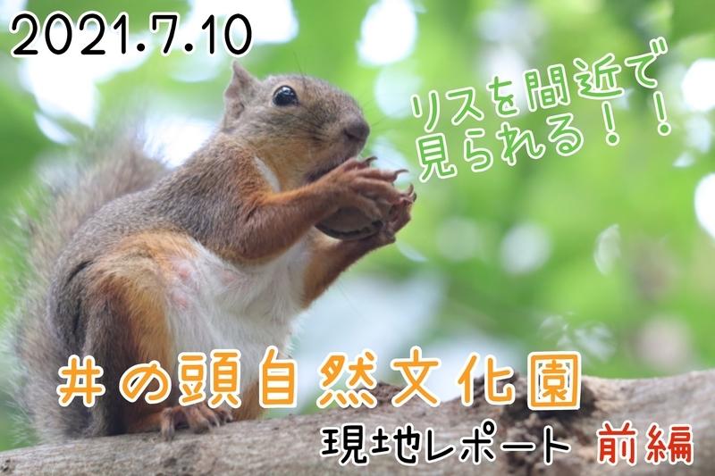 f:id:zoonimal:20210718175130j:plain