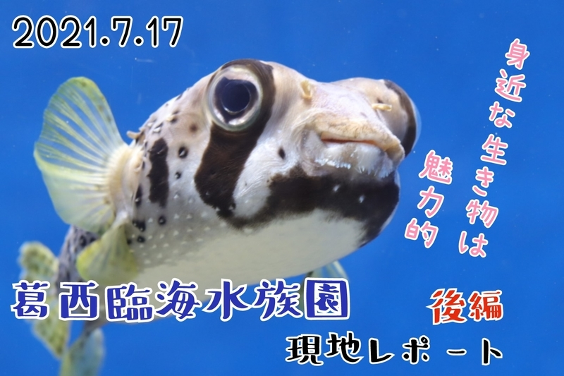 f:id:zoonimal:20210801181634j:plain