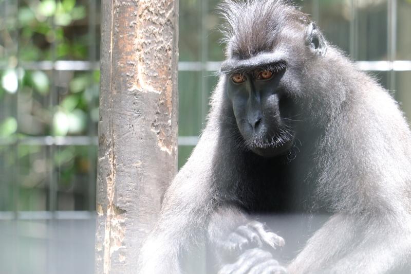 f:id:zoonimal:20210801214712j:plain