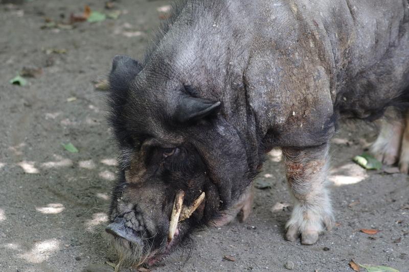f:id:zoonimal:20210801214812j:plain