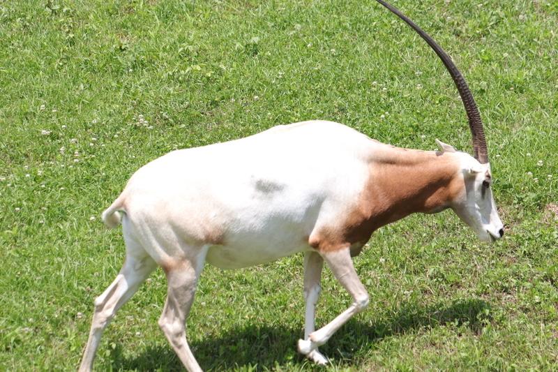 f:id:zoonimal:20210801215207j:plain